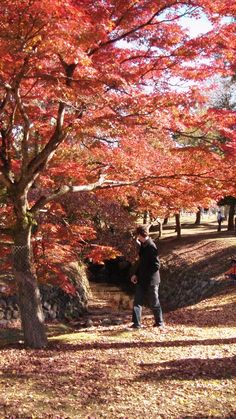 Nara in Autumn.