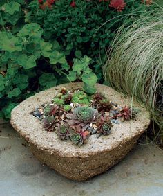 Make Your Own Hypertufa Container--  hypertufa looks like stone but weighs less and takes whatever shape you want.  Tutorial here www.finegardening...by Michelle Gervais