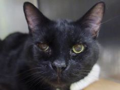 TO BE DESTROYED – 04/10/15 – FLUTE – A1031326 – MANHATTAN, NY