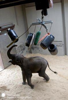 Kandula and Pickle Barrel, National Zoo Games