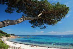 Strand Palombaggia Korsika Frankreich