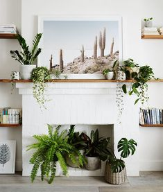 Live plants to decorate unused fireplace Unused Fireplace, Faux Fireplace, Fireplace Ideas, Fireplace In Dining Room, Fireplaces, Mantel Ideas, White Fireplace, Bedroom Fireplace, Home Living Room