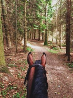 "mybigfathorseblog: ""The moment right before Fender spotted a deer and hightailed in the opposite direction! """