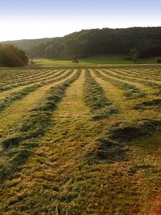 Sweet is the air with new mown hay