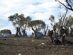 Un refugiat descansant als peus d'una olivera al camp de Mòria.