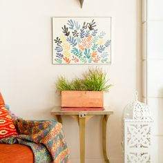 Houseplants on Houzz: Tips From the Experts