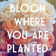 How to bloom where you are planted:  Step 1: Adjust your mindset to deal with adversity and change.  Step 2: Find opportunities to support and uplift  Step 3: Practice gratitude and render praise  #fenimorerutland #joy17  #inspiration #motivation #faith #family #blessed #wisdom #grace #pray