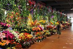 Paris-flower-market.jpg 768×515 pixels