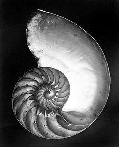 Edward Weston   AZ PHOTOBLOG