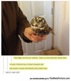 Owl Is Displeased