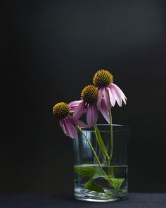 Perennials plants survive the winter and many produce beautiful flowers. Here is useful advice on growing perennials. Flowers Nature, Love Flowers, My Flower, Beautiful Flowers, Still Life Photos, Still Life Art, Deco Floral, Flower Quotes, Still Life Photography