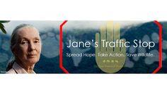 Petition · Helfen Sie Jane Goodall den illegalen Handel mit wildlebenden Tieren…