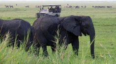 Viewing elephants on a Mozambique safari in Gorongosa National Park