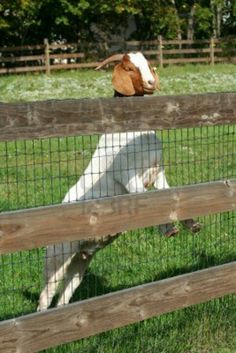 Goat fence with wood.....like this goat fence. would look great with our own milled lumber.