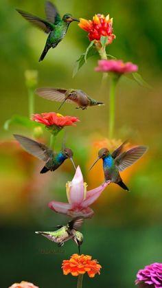 Bird beautiful flying animals New Ideas Beautiful Creatures, Animals Beautiful, Cute Animals, Animals Amazing, Pretty Animals, Most Beautiful Birds, Pretty Birds, Exotic Birds, Colorful Birds