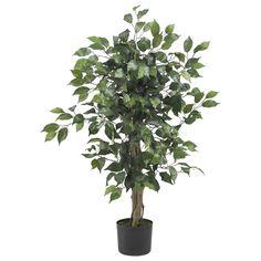 3' Ficus Silk Tree