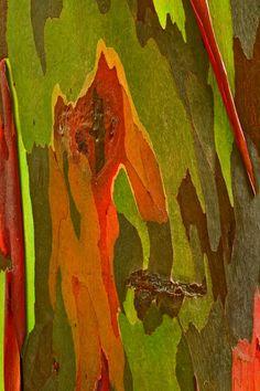 tronc d eucalyptus arc en ciel d tail 1 ecorces pinterest arbres eucalyptus en arc en. Black Bedroom Furniture Sets. Home Design Ideas
