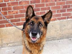 SAFE --- SUPER URGENT 8/11/14 Brooklyn Center   MISSY - A1010061   FEMALE, BLACK / BROWN, GERM SHEPHERD MIX, 9 yrs STRAY - STRAY WAIT, NO HOLD Reason STRAY  Intake condition EXAM REQ Intake Date 08/10/2014, From NY 11434, DueOut Date 08/13/2014  https://www.facebook.com/Urgentdeathrowdogs/photos/a.617942388218644.1073741870.152876678058553/853694831310064/?type=3&theater