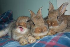 """This is what they look like at a few months old. 