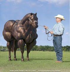 steroid animal test