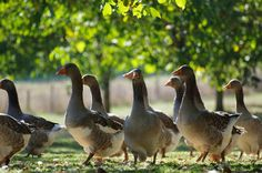 Dordogne, French Country Style, France, Pet Birds, Animals, Country Living, Photos, Wedding, Viajes