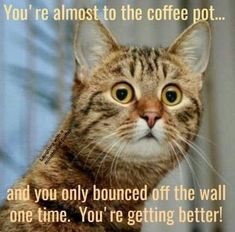 Animal Captions, Funny Animals With Captions, Funny Cat Photos, Funny Animal Memes, Cat Memes, Funny Pictures, Coffee Quotes Funny, Coffee Humor, Coffee Sayings