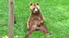 Impolite, Itchy Bear.  Ha ha ha ha ha!!