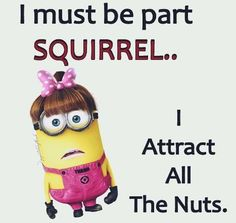 I might be part squirrel . I attract all the nuts Minion Jokes, Math Jokes, Minions Quotes, Funny Minion, Funny Gags, Haha Funny, Funny Memes, Hilarious, Sarcastic Quotes