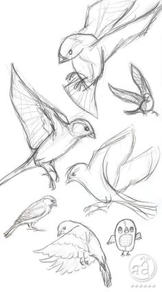 40 Free and Simple Animal Sketches Ideas and Inspirations for Drawing – Samir – Animal Draw… . Secrets of being well-groomed 40 Free and simple animal sketches Ideas and inspiration for drawing – Samir – Animal Draw… . Pencil Art Drawings, Bird Drawings, Art Drawings Sketches, Sketch Drawing, Drawing Ideas, Drawing Tips, Learn Drawing, Drawing Drawing, Sketches Of Birds