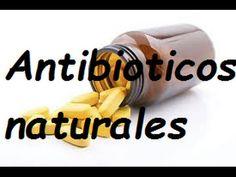 8 Plantas naturales bactericidas