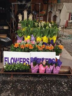 Stop by Rt. 522 Country Crafts in Beaver Springs to pick up your Spring Flowers today!