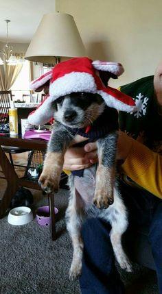 Merry Christmas from Bleu Dog ~•♡•~