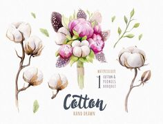 Buy Watercolour Cotton & Birds by mykef on GraphicRiver. This set of high-quality hand painted watercolor cotton elements. Perfect graphic for DIY, wedding invita. Plant Illustration, Watercolor Illustration, Watercolour Birds, Watercolor Plants, Cotton Bouquet, News Web Design, Create Invitations, Wedding Invitations, Peace Art