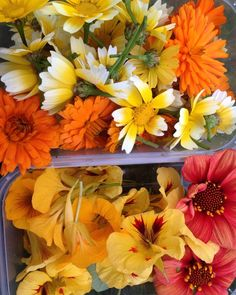 #edible flowers still flowering well at this rate we will be picking in November