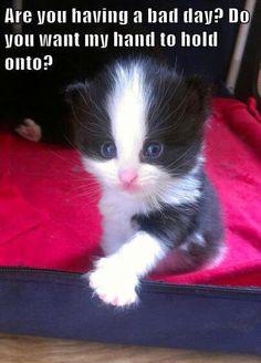 This little Kitten is cute