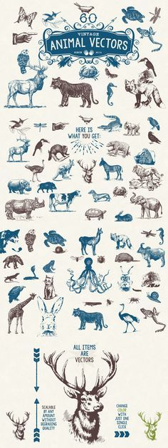 60 Vintage Animal Vectors by MouseMade| The Comprehensive, Creative Vectors Bundle Mar 2015 from Design Cuts