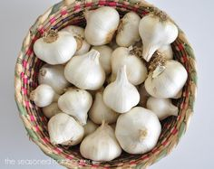 Growing garlic is easy and doesn't require a lot of space. This post demonstrates how simple it is to grow garlic in a container.