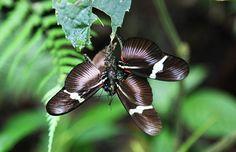 Costa Rica - Canopy