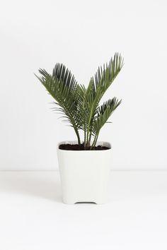 Eventueel ook een mooie plant voor in badkamer en slaapkamer. Ik zou persoonlijk voor een smallere, hogere pot kiezen. Witte kleur staat er wel heel mooi bij. Meerdere kleuren zijn mogelijk, afhankelijk van de overige basiskleuren van de ruimte.