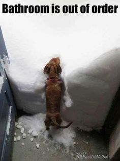Don't forget to clear a path for your pets