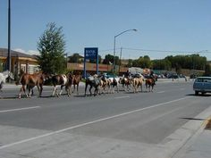 Pinedale Wyoming  | pinedale wyoming is the largest community in sublette county with