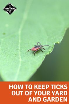 Learn the steps to reduce and prevent ticks in your yard and garden. Try these gardening tips and prevention methods to keep ticks off you and your pets. Organic Vegetables, Growing Vegetables, Gardening For Beginners, Gardening Tips, Home Vegetable Garden, Garden Pests, Herbs Garden, Garden Pond, Lawn Care