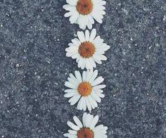 #daisies #flowers #nature