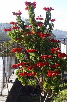 analiseagora: As flores além de colorir e embelezarem o jardim r...
