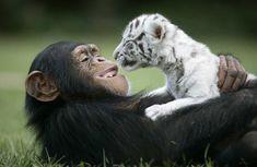 Anjana & baby tigers