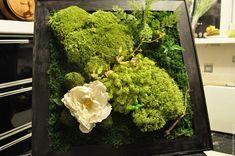 Похожее изображение Lettuce, Broccoli, Vegetables, Green, Food, Essen, Vegetable Recipes, Meals, Yemek