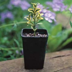 Grow your own specimens for free by propagating your own plants! Great way to share with friends and family!
