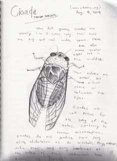 Nature Notebook: Cicada A few things to include as you nature journal. #nature #notebooking