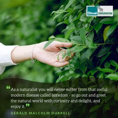 Just a reminder! There's so much to be curious about and amazed by around you....don't forget to take in the beauty of the natural world, despite the hustle and bustle of a new week.  #Mondaymotivation #MotivationMonday #mondaymood #stayconnected #staycurious #geralddurrell #naturalista #naturalist #quotestoinspire #quotes #quotestagram #LoversofLife #DilmahConservation #DilmahTea Gerald Durrell, Shared Reading, Make Business, Just A Reminder, Data Protection, Educational Programs, Human Services, Bustle, Social Justice