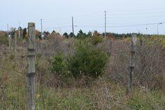 Abandoned North Fork vineyard sells for $8.5M...